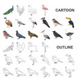 types of birds cartoon icons in set collection for vector image