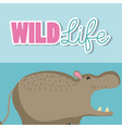 hippo wildlife animal cartoon vector image