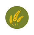 wheat paddy logo vector image