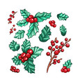 xmas red berries california holly isolated plants vector image vector image
