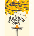 autumn sale banner with cup hot drink on table vector image