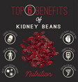 kidney beans benefits vector image