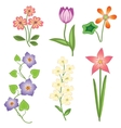 Flower set Tulip camomile daisy petunia orchid vector image vector image
