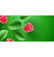 fresh green mint leaves vector image vector image