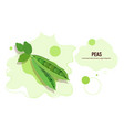 fresh green pea pod with beans sticker tasty vector image