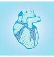 heart ice human blue with veins and ventricles vector image vector image