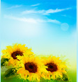 nature background with yellow sunflowers and blur vector image