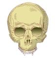 The human skull vector image