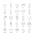 body parts icons set line style vector image