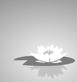flower lily against a dark background vector image