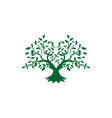 tree root greenoak logo vector image