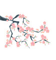 branch of sakura or cherry blossoms vector image