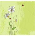 ladybug on chamomile flower and grunge green grass vector image