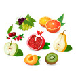realistic fruit halves vector image
