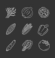 vegetables chalk icons set vector image vector image