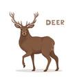 a cartoon deer with long vector image vector image