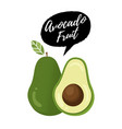 avocado fruit vector image