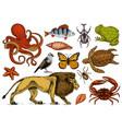 set of animals reptile and amphibian mammal