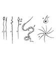 spermatozoa vintage vector image vector image