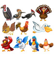 Bird collections vector image vector image