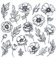 collection of hand drawn anemone flowers vector image vector image