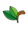 fruit leaves isolated vector image