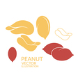 Peanut Icon set vector image vector image