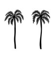 set of hand drawn palm tree design element for vector image vector image