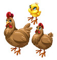 stages growing brown chicken birds vector image vector image