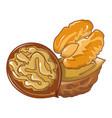 walnuts icon cartoon style vector image