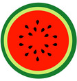watermelon summer fruit vector image vector image