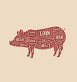 pig butcher diagram pork cuts design element for vector image vector image