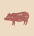 pig butcher diagram pork cuts design element vector image