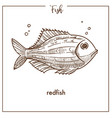 redfish sketch fish icon of snapper or vector image vector image