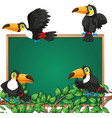 toucan on blackboard frame vector image vector image