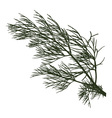 twig of dill vector image