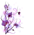 White card with orchid branch card with orchid vector image vector image