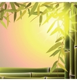 Bamboo trees and leaves at sunset time vector image vector image