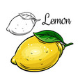 lemon drawing icon vector image
