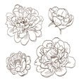 Set peony flowers isolated vector image vector image