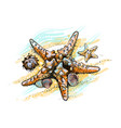 starfish and shells on a summer beach in sand vector image