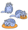 blue cats emoticons set isolated vector image