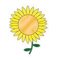 beautiful nature sunflower season botanical vector image vector image