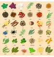 herbs and spices icons vector image