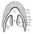 medusoid structure vintage vector image vector image