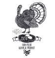 turkey organic farm product animals hand drawing vector image