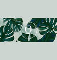 monstera leaves horizontal banner wide evergreen vector image vector image