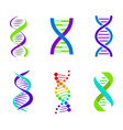 colorful dna spirals bright vector image vector image
