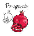 pomegranate drawing icon vector image vector image