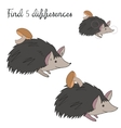 Find differences kids layout for game hedgehog vector image vector image